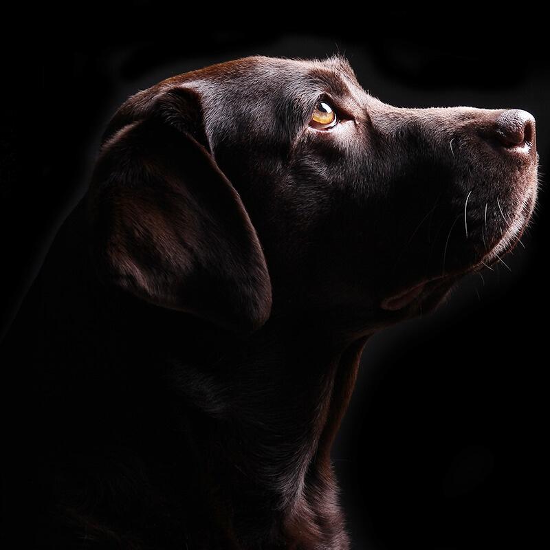 Dog Walker, Abingdon