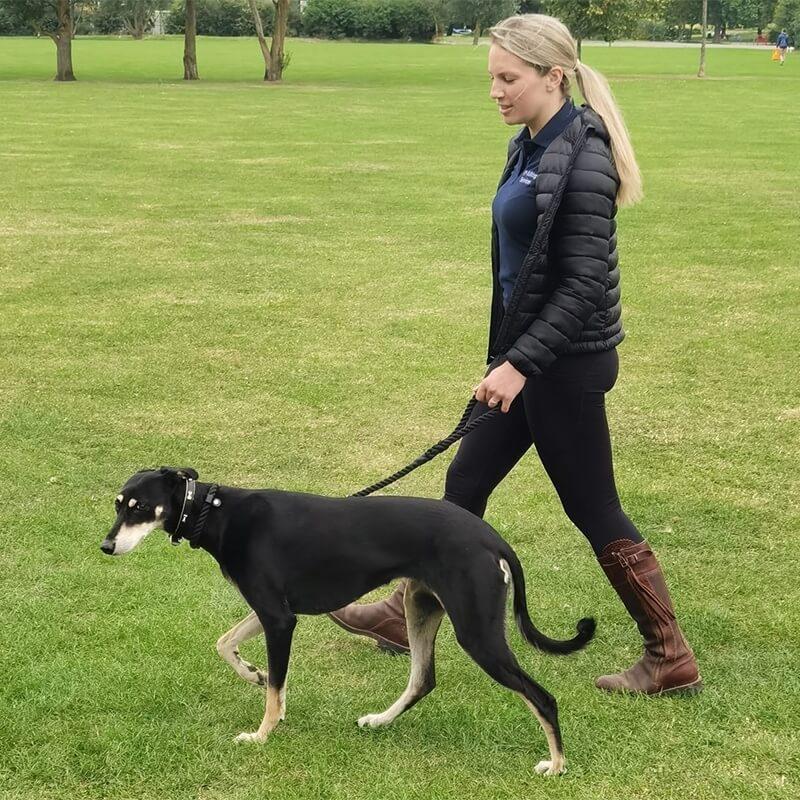 Professional Dog Walker, Abingdon