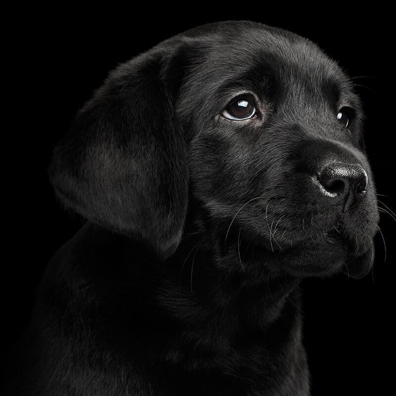 Puppy / Dog Visits, Abingdon