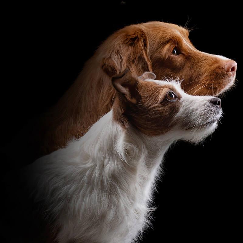 Dog Walking, Dog Visits, Dog Taxi, Abingdon
